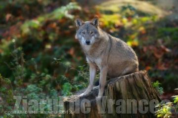 Întâlnirea a avut în centrul discuţiilor lupii din Carpaţi