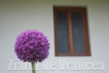 Vă place această minunată floare?